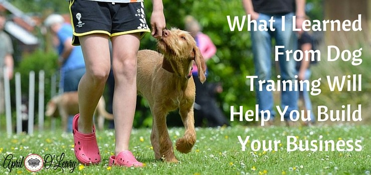 What I Learned From Dog Training Will Help You Build Your Business